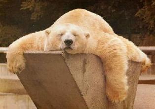sleeping-bear1