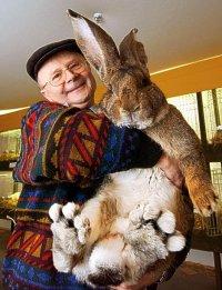 worlds_largest_rabbit_212