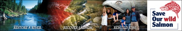 Salmon Letter