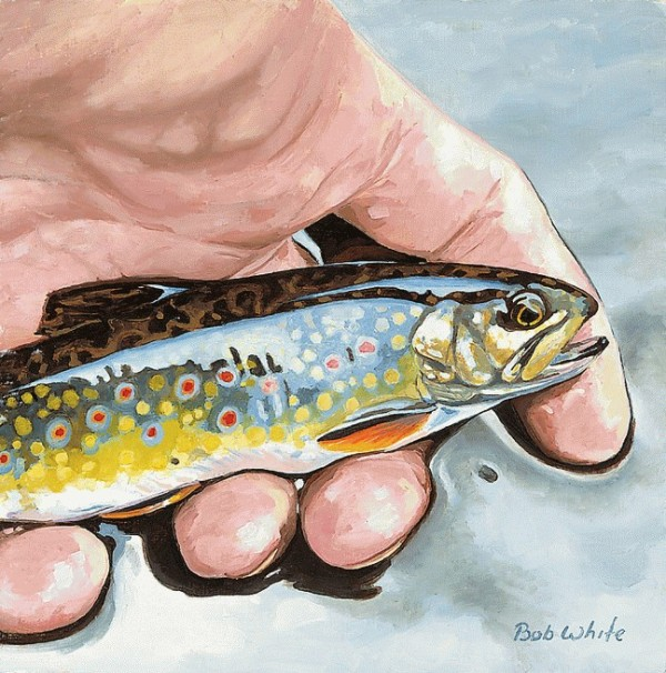 Small Fry-Brook Trout: Artist Bob White