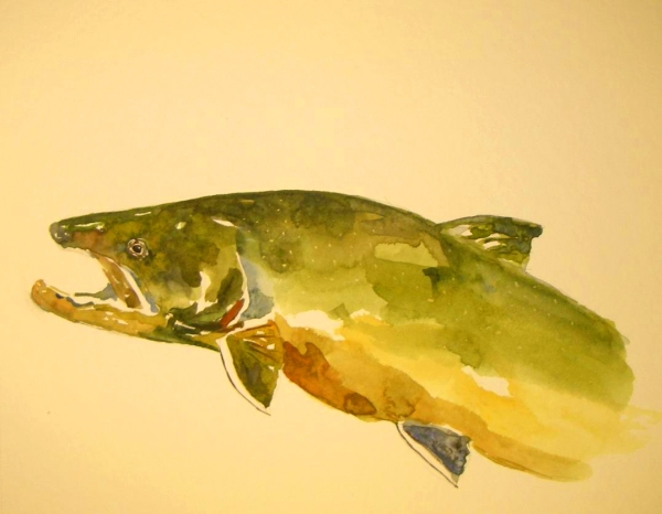Bull Trout: Watercolor by Mark Yuhina