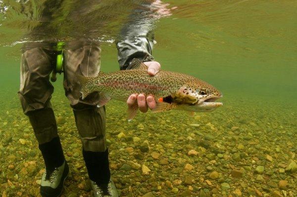 Alaska West: Rainbow Trout