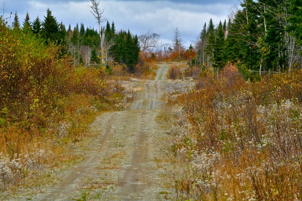 "This is the road we stalked the moose down. The front of the truck would have been just barely visible around the top corner. Notice the ""dips"" in the road where we could run, completely undetected. The longest walk of my life...!"