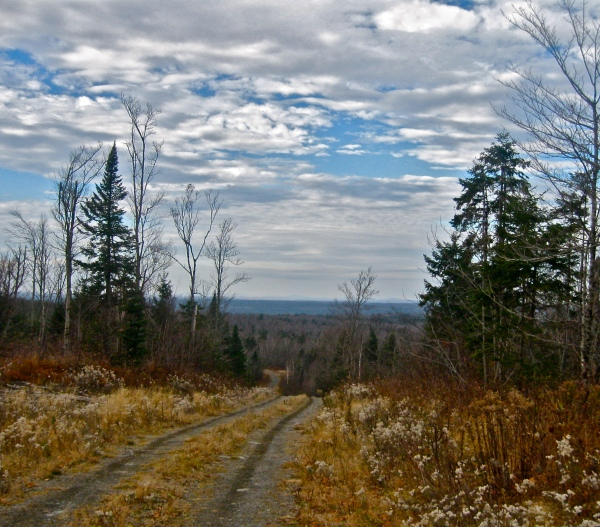 Allagash, ME--The North Maine Woods, looking off towards Quebec.